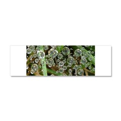Dew on Grass 1x2 Car Magnet 10 x 3