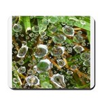 Dew on Grass 1x2 Mousepad