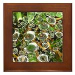 Dew on Grass 1x2 Framed Tile