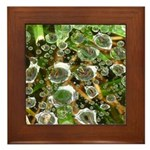 Dew on Grass 1x2 Framed Tile