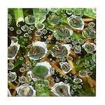 Dew on Grass 1x2 Tile Coaster