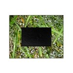 Dew on Grass 1x2 Picture Frame