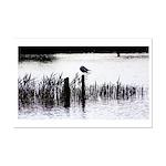 Seagull resting Poster Print (Mini)