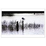 Seagull resting Poster Art