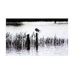 Seagull resting Wall Sticker