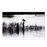 Seagull resting Postcards (Package of 8)