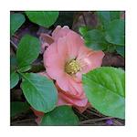 Camellia Japonica Tile Coaster