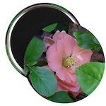 Camellia Japonica 2.25