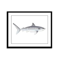 Tiger Shark f Framed Panel Print