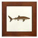 Whale Shark f Framed Tile