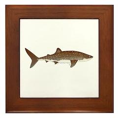 Whale Shark f Framed Tile