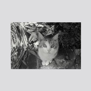 Soul staring cats Rectangle Magnet