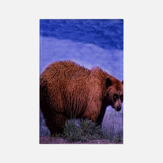 Brown Grizzly Bear Rectangle Magnet