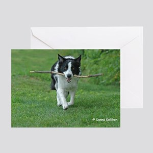 Border Collie Greeting Cards (Pk of 10)