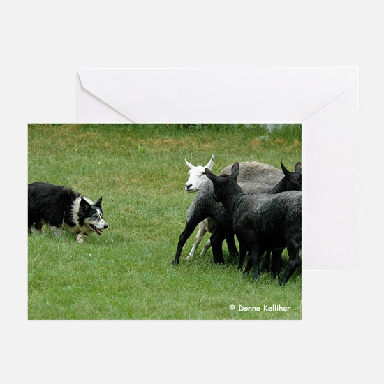 BC Herding Greeting Cards (Pk of 10)