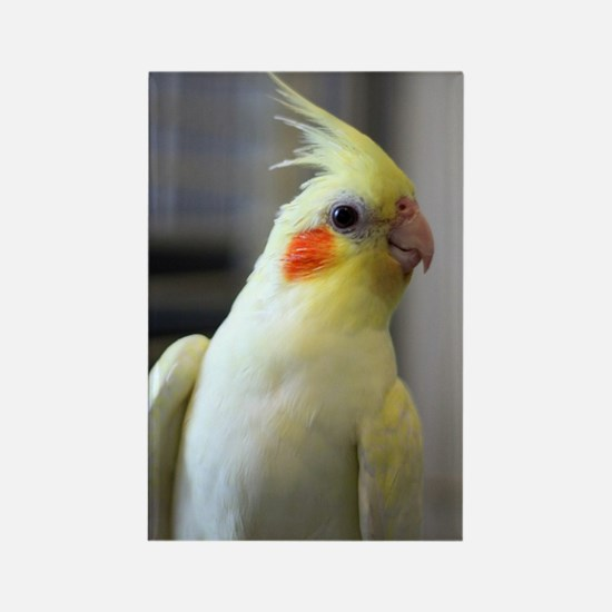 cockatiel Rectangle Magnet