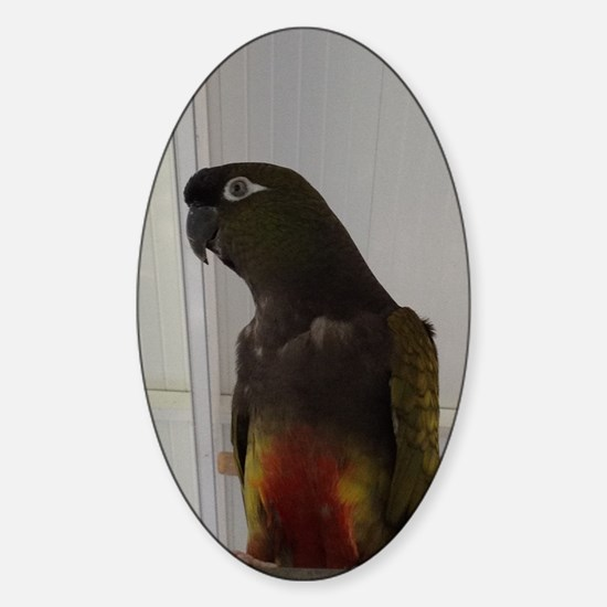 Patagonian Conure Sticker (Oval)