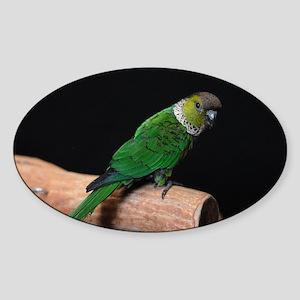 blackcap conure Sticker (Oval)