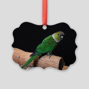 blackcap conure Picture Ornament