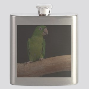 Green conure Flask