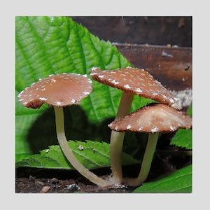 Spotted Brown Mushrooms Tile Coaster