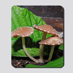 Spotted Brown Mushrooms Mousepad