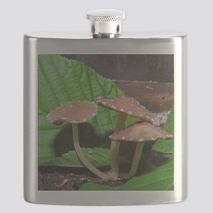 Spotted Brown Mushrooms Flask