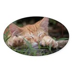 AEUC Sleeping Kitten Oval Sticker