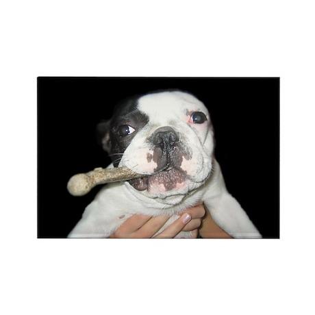 French Bulldog Rectangle Magnet (10 pack)