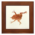Surinam toad f Framed Tile
