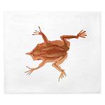 Surinam toad f King Duvet