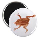 Surinam toad f 2.25