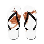 Surinam Toad c Flip Flops