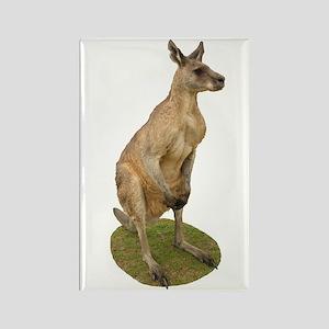 Jamie the Kangaroo Rectangle Magnet