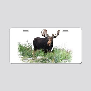 Moose Eating Flowers Aluminum License Plate