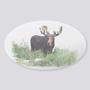 Moose Eating Flowers Sticker (Oval)