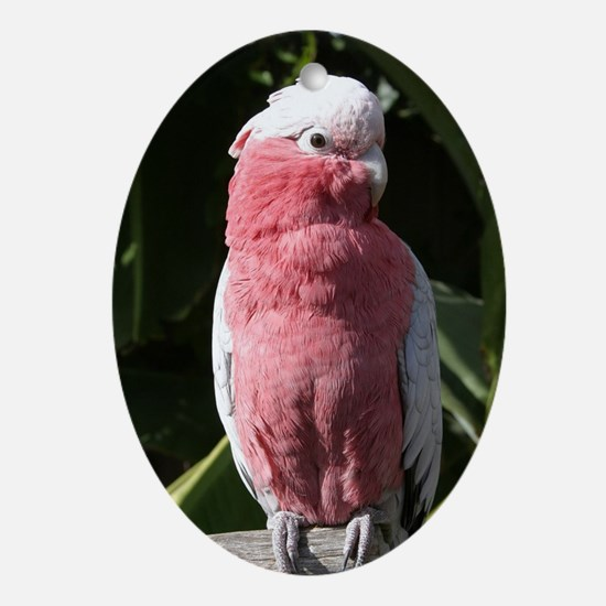 Rose Breasted Cockatoo Oval Ornament