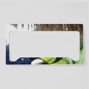 Hyacinth Macaw License Plate Holder