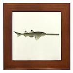 Sawfish Framed Tile
