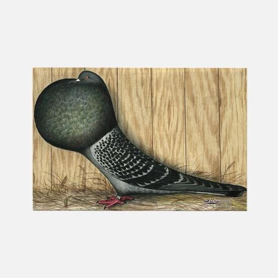 German Cropper Pigeon Rectangle Magnet