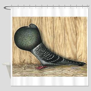 German Cropper Pigeon Shower Curtain