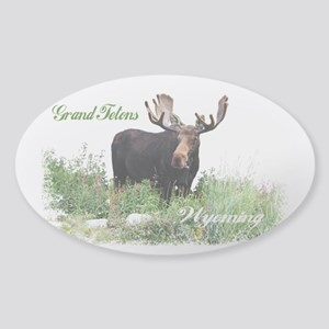 Grand Tetons WY Moose Sticker (Oval)
