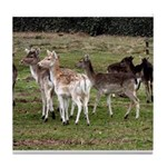 deer in the park Tile Coaster