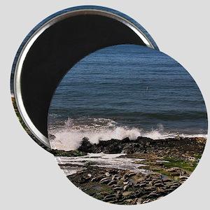 Seals Magnet