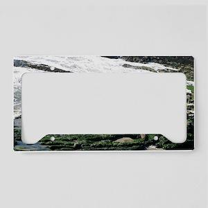 Seals License Plate Holder