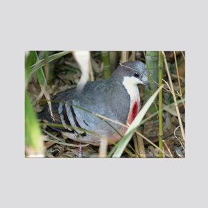Bleeding Heart Pigeon Rectangle Magnet