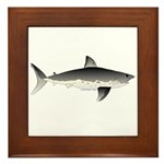 Salmon Shark f Framed Tile