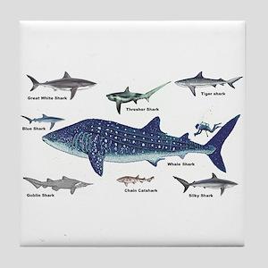 Shark Types Tile Coaster