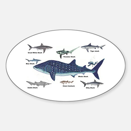 Shark Types Decal