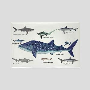 Shark Types Rectangle Magnet